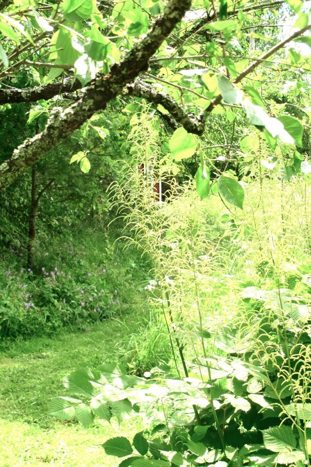 Vintageprylar, torpet, träd, grönska, sommar, lummigt, buskar, trädgård